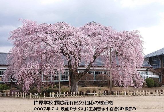 南信州飯田市の杵原学校の枝垂桜