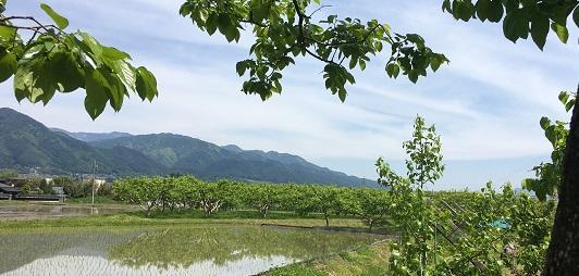 飯田市の田園風景 サローネヘアカットブラシの会社の窓から見えるのどかな新緑の風景